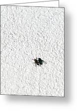 Fly On A Wall Greeting Card by Alexander Senin