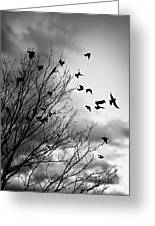 Flying Birds Greeting Card by Elena Elisseeva
