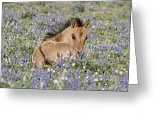 Foal In The Lupine Greeting Card by Carol Walker