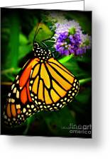Food For Flight Greeting Card by Lainie Wrightson