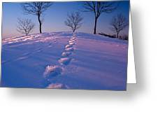 Footsteps Greeting Card by Cale Best