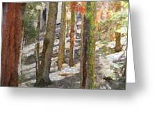 Forest For The Trees Greeting Card by Jeff Kolker