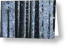Forest In Winter Greeting Card by Bernard Jaubert