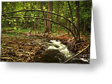 Forest River Greeting Card by Elena Elisseeva