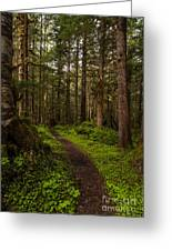 Forest Serenity Path Greeting Card by Mike Reid