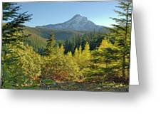 Forest View Greeting Card by Arthur Fix