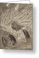 Fossil Shark Teeth Greeting Card by Artist and Photographer Laura Wrede