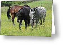 Four Horses Greeting Card by Susan Leggett