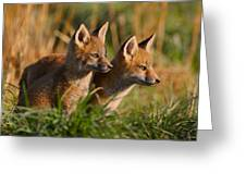 Fox Cubs At Sunrise Greeting Card by William Jobes