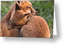Fox Cubs Cuddle Greeting Card by William Jobes