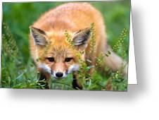 Fox Kit Hiding In The Grass Greeting Card by Merle Ann Loman