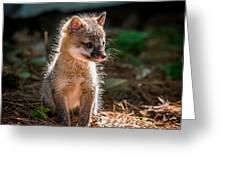 Fox Kit Greeting Card by Paul Freidlund