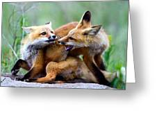 Fox kits at play - an exercise in dominance Greeting Card by Merle Ann Loman
