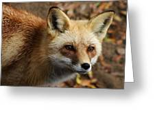 Fox Greeting Card by Paulette Thomas