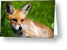 Fox Pup Greeting Card by Fabrizio Troiani
