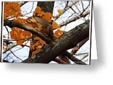 Fox Squirrel In Autumn Greeting Card by Sara  Raber