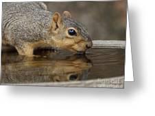 Fox Squirrel Greeting Card by Lori Tordsen