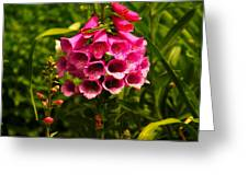 Foxglove Greeting Card by Jeff  Swan