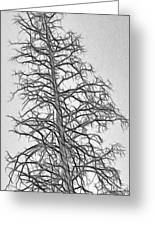 Fractal Tree Abstract Greeting Card by Steve Ohlsen