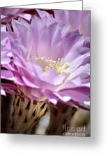 Fragile Beauty Greeting Card by Deb Halloran