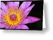 Fragile Beauty Greeting Card by Kim Andelkovic