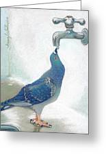 Frank's Pigeon Greeting Card by Tracy L Teeter