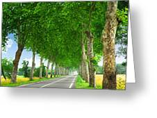 French country road Greeting Card by Elena Elisseeva