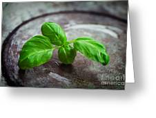 Fresh Basil Greeting Card by Mythja  Photography