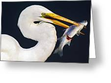 Fresh Catch Of The Day Greeting Card by Paulette Thomas
