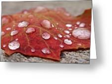 Fresh Drops Greeting Card by Christina Rollo