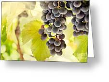 Fresh Ripe Grapes Greeting Card by Mythja  Photography