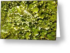 Fresh Romaine Greeting Card by Sherry Dooley