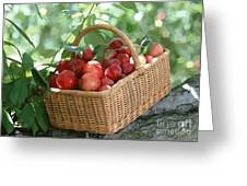 Freshly Harvested Peaches  Greeting Card by Lanjee Chee