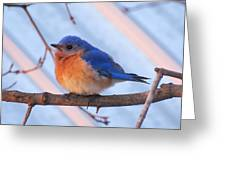 Friendly Bluebird Greeting Card by David Lankton
