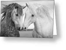 Friends Iv Greeting Card by Tim Booth