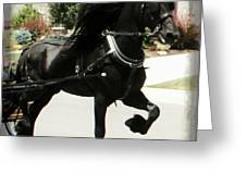 Friesian Driving Greeting Card by Royal Grove Fine Art