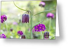 Fritillary And Primula  Greeting Card by Tim Gainey