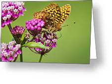 Fritillary Butterfly Square Format Greeting Card by Christina Rollo