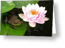 Frog And Lily Greeting Card by Debbie Finley