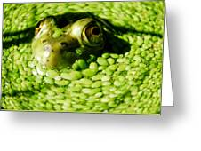 Frog Eye's Greeting Card by Optical Playground By MP Ray
