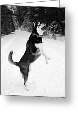 Frolicking In The Snow - Black And White Greeting Card by Carol Groenen