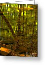From River Rocks To Forest Reflections Greeting Card by Adam Jewell