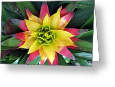 From The Top Down Greeting Card by Darleen Stry
