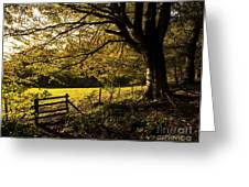 From Woods To Fields Greeting Card by Anne Gilbert