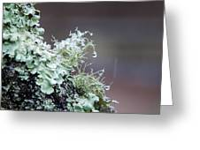 Frosted Moss Greeting Card by Mary Katherine Powers