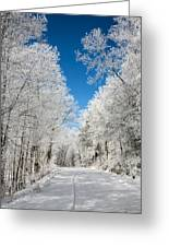 Frosted Winter Greeting Card by John Haldane