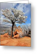 Frosted Wonderland 3 Greeting Card by Diane Alexander