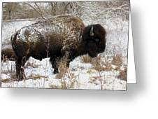 Frosted Woolly Greeting Card by David Dunham