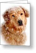 Frosty Mug Greeting Card by Christina Rollo