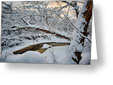 Frozen Creek Greeting Card by Sebastian Musial